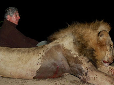 David Scholey and dead lion.jpg
